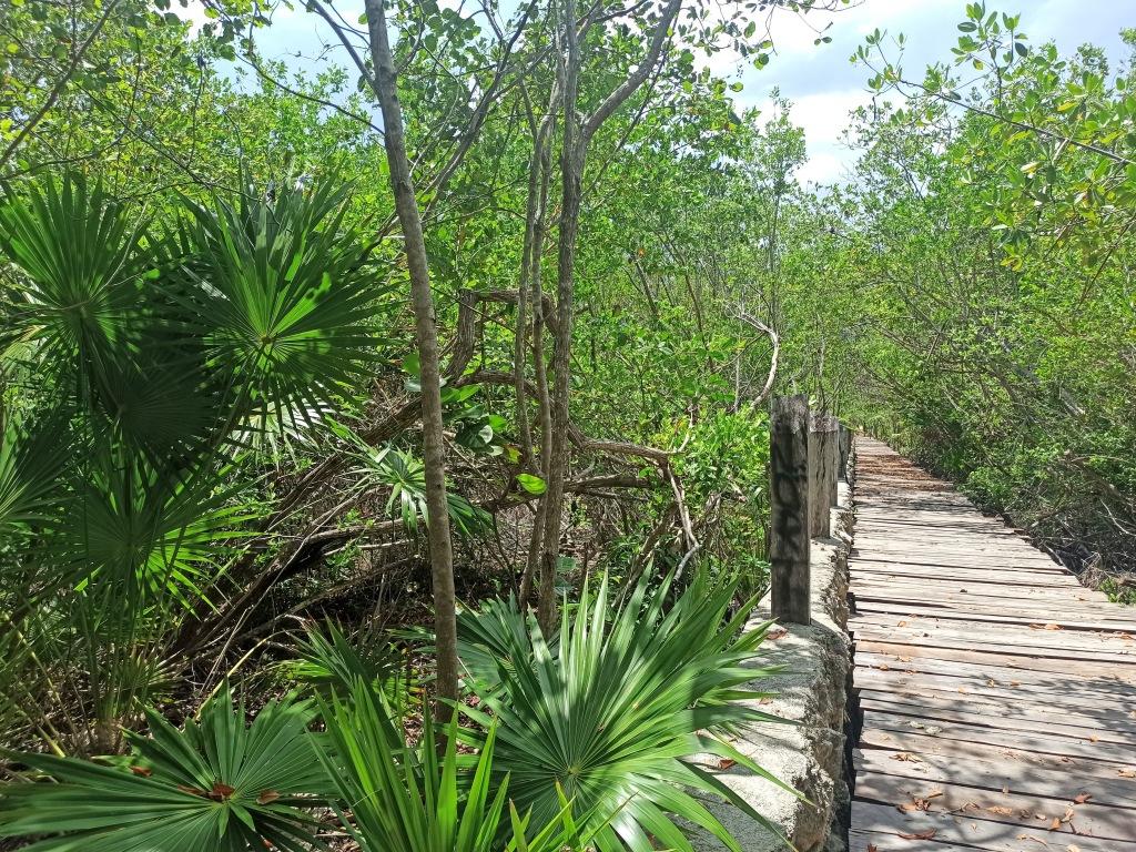 xpu-ha, dzungla, priroda, palme, meksiko, mexico