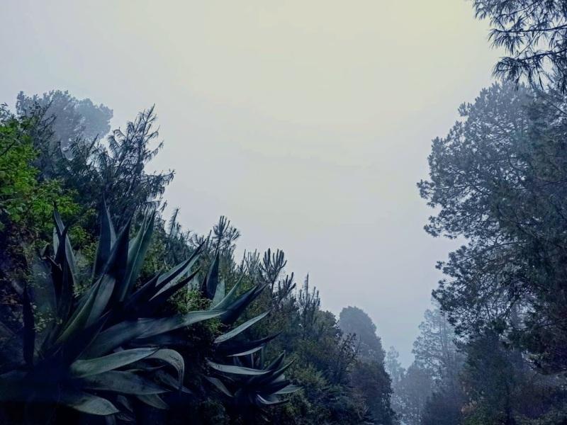 agave divljina magla oaxaca meksiko oahaka mexico